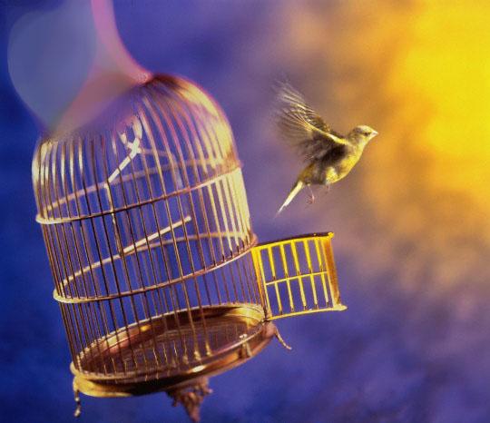 клытка-пташка